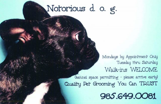 notorious-dog-e1644104-large.jpg